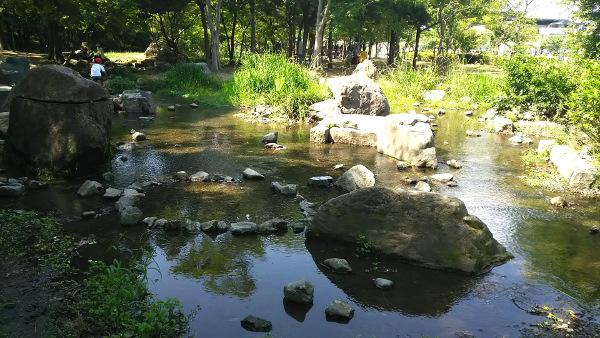 京都梅小路公園を流れる小川「河原遊び場」で水遊び。アメンボやザリガニもいてたよ。