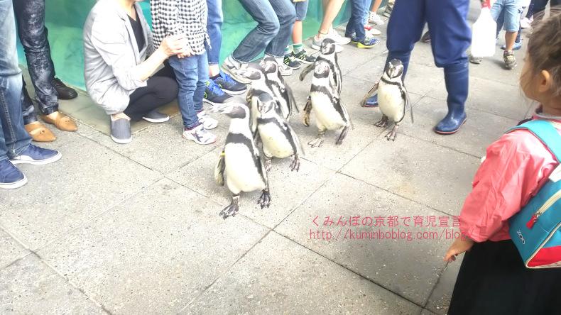 【城崎マリンワールド】アジ釣りやペンギンのお散歩が楽しい!ランチできるレストランや入場料金割引情報も。